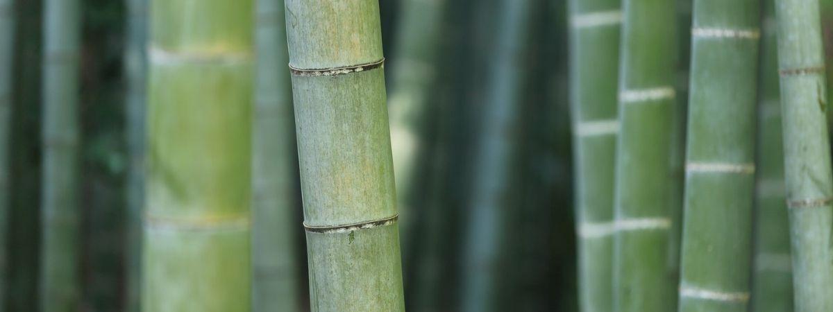 The Basics of Bamboo